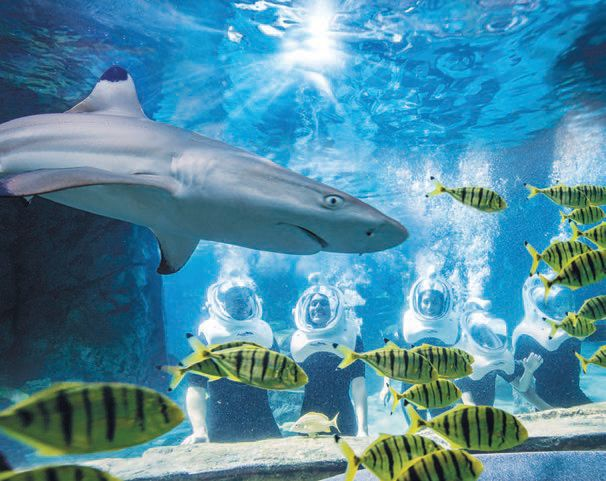 Swim with more than 20 sharks at Discovery Cove PHOTO COURTESY OF: DISCOVERY COVE