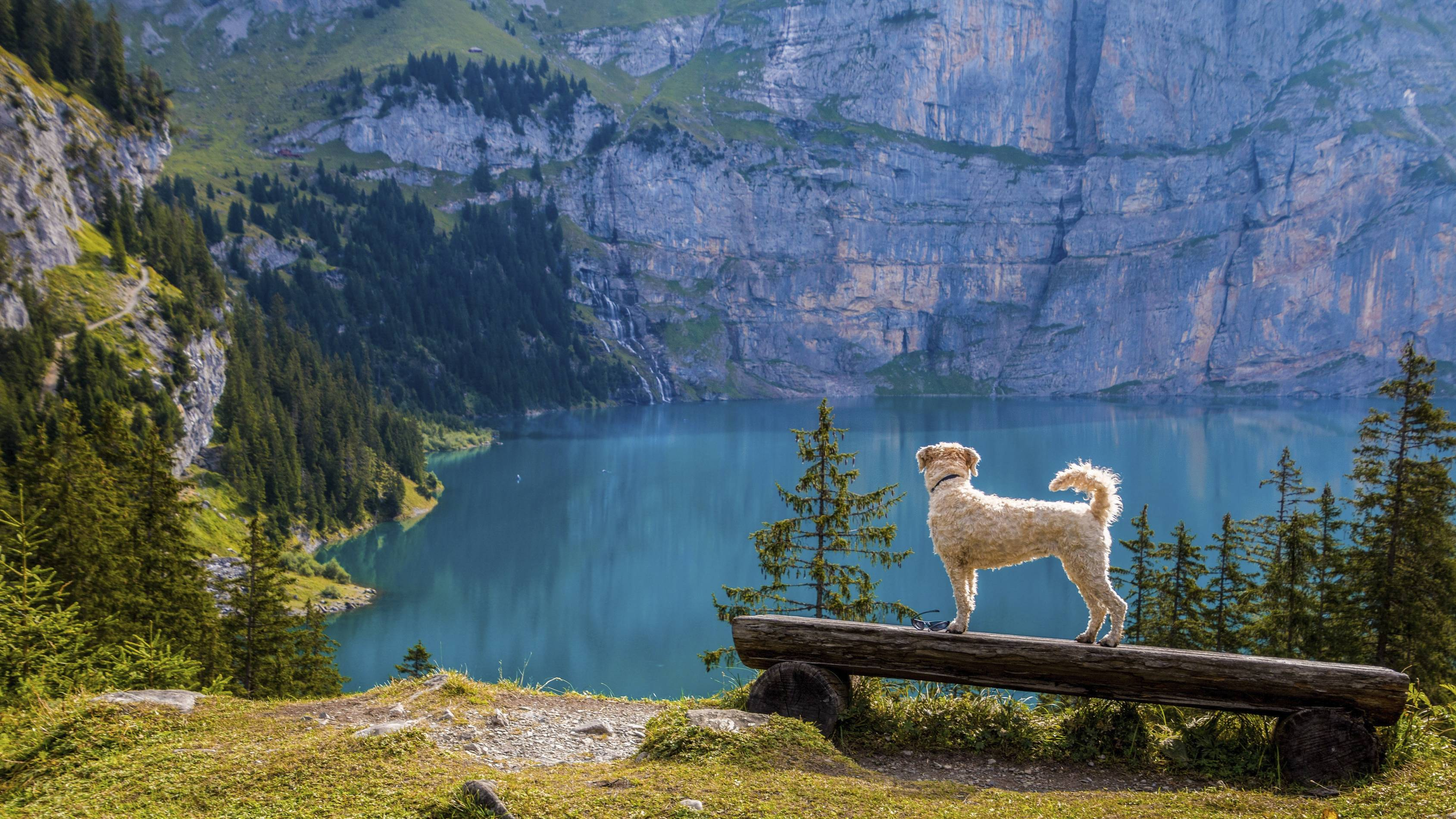 Dog Friendly Travel Destinations Across America